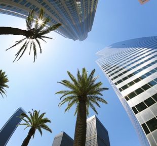 Photo of palm trees and Los Angeles skyscrapers.